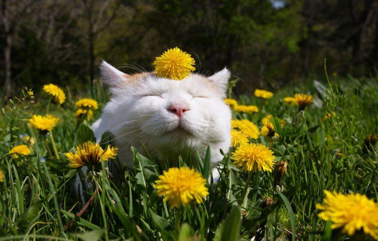 Весняний календар щедрить вихідними