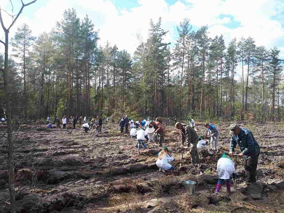 lis_3 Бородянські школярі висадили дерева на лісовій ділянці площею 0,9 га