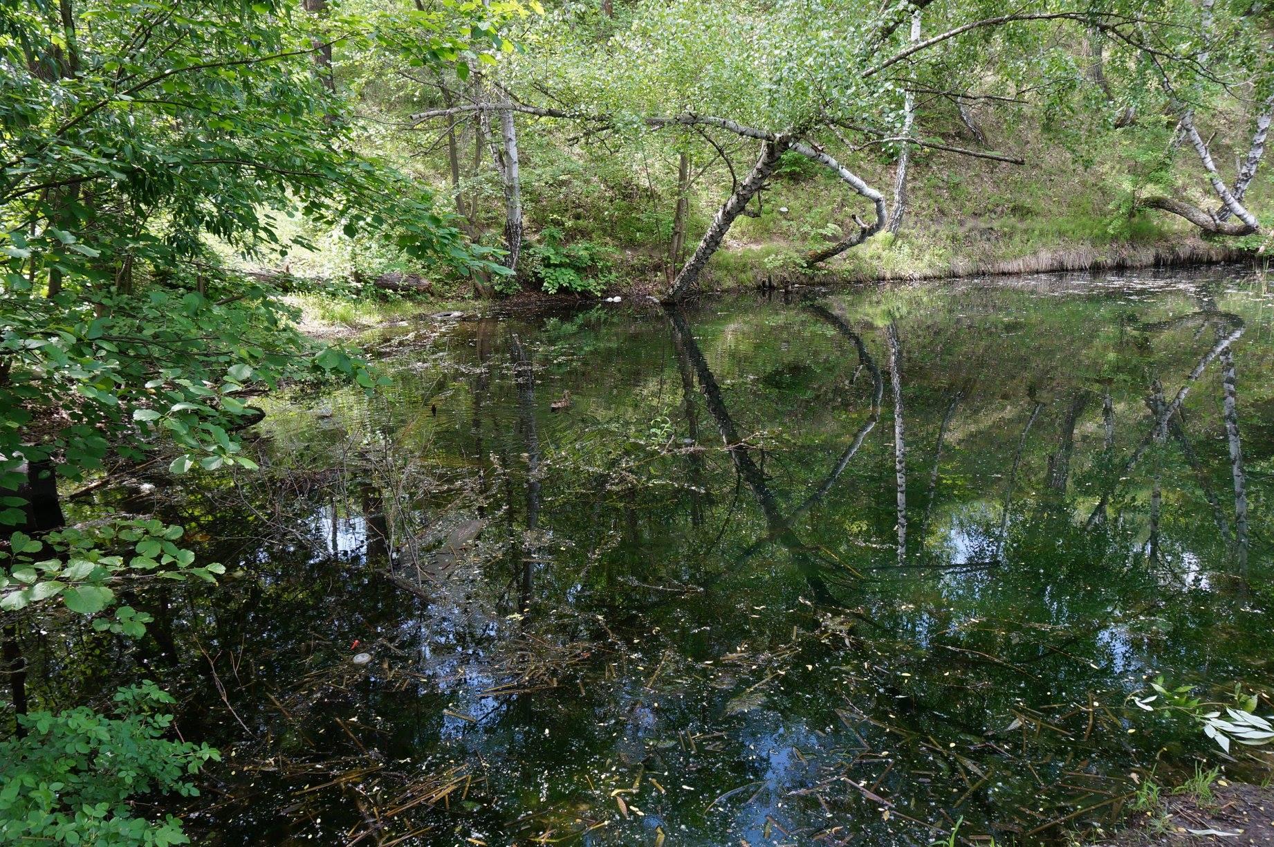 32679824_159596301557464_2677497365539061760_o Смертельне сміття: незаконні звалища знищують вишгородський ліс та річку Почайна
