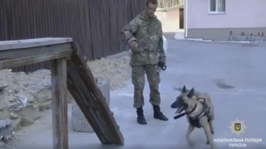 Ірпінський кінологічний центр плекає чотирилапих офіцерів поліції