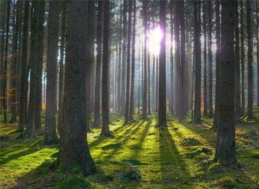Прокуратура не дала знищити в Ірпені 15 га лісу, який ірпінський міський голова відчужив з власності держави під забудову