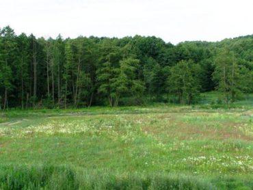 Протягом року прокуратура повернула державі майже 6 га земель Біличанського лісу вартістю понад 40 мільйонів гривень