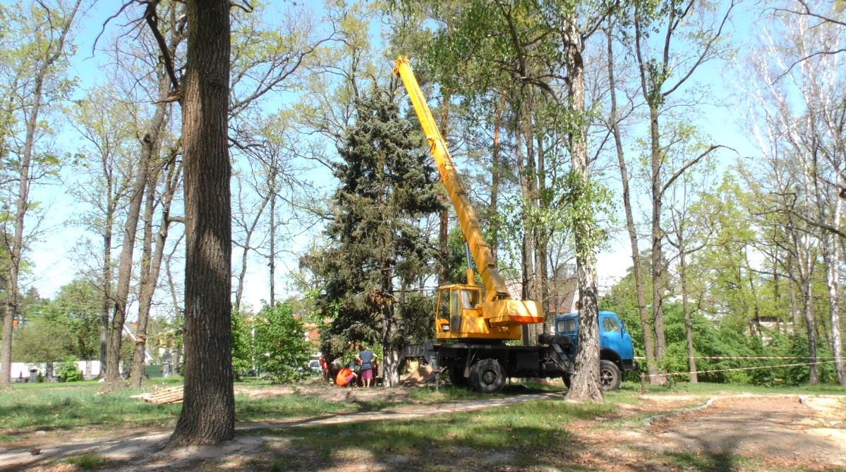 """Ялинкова епопея: живі дерева з площі поблизу ЕКО-маркету пересадили до парку """"Перемога"""""""