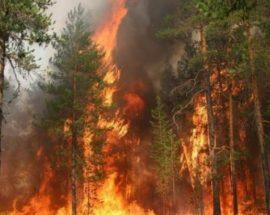 ДСНС: в Україні переважає найвищий рівень пожежної небезпеки