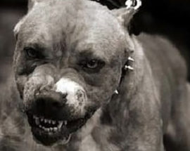 Трагедія в Ірпені: собака покусав свою господиню