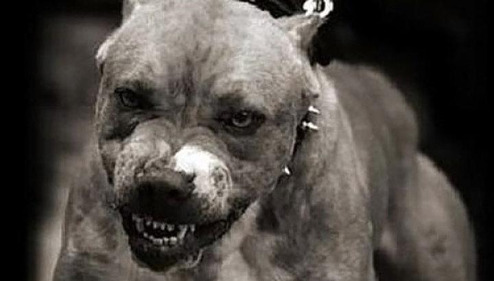 13 Трагедія в Ірпені: собака покусав свою господиню