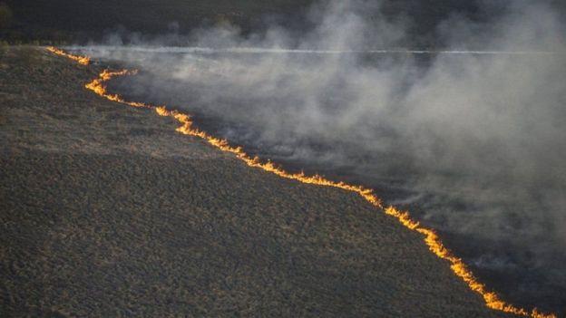 У зоні Чорнобильської АЕС триває масштабна пожежа
