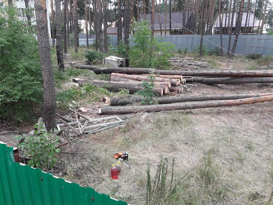 Lisova-vyrubka-Kovalchuk-kolody-1 В Ірпені по вулиці Лісовій Михайло Ковальчук на своїй ділянці незаконно знищує дерева під майбутню забудову