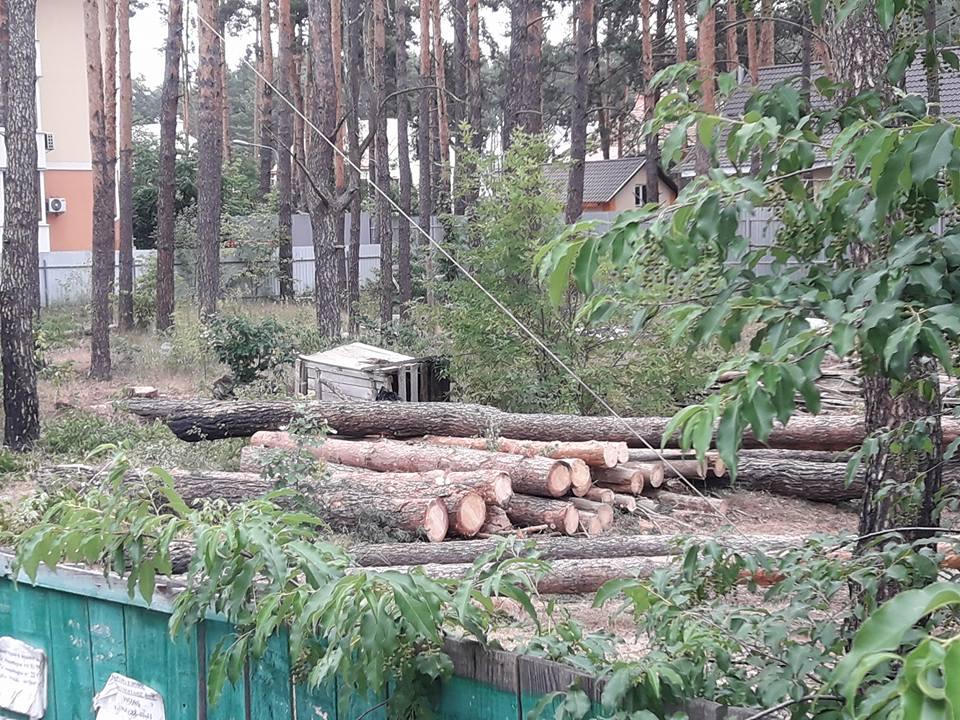 Lisova-vyrubka-Kovalchuk-kolody В Ірпені по вулиці Лісовій Михайло Ковальчук на своїй ділянці незаконно знищує дерева під майбутню забудову