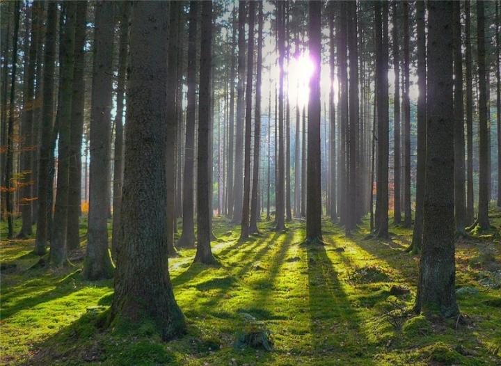 Державі повернуто 15 га лісових земель, які незаконно відчужено за заявою ірпінського мера Володимира Карплюка