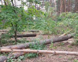 Посилюється адміністративна та кримінальна відповідальність за знищення лісів і контрабанду деревини
