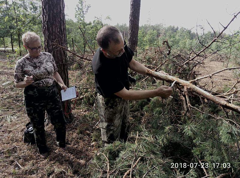 2707_dereva_2 Ліси Бородянщини потерпають від короїда