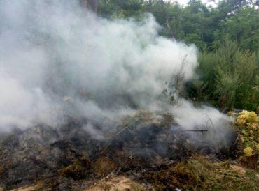 Вогнеборці ліквідували пожежу на гостомельському кладовищі
