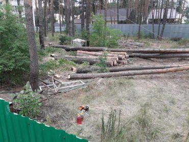 Суд зобов'язав поліцію внести інформацію про вирубування дерев забудовником Михайлом Ковальчуком в Ірпені по вулиці Лісовій до ЄРДР