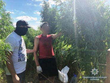 Під час аеророзвідки в Ірпені поліцейський дрон зафіксував плантацію конопель та її власника, який саме доглядав за рослинами
