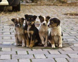 Домашні тварини в Білій Церкві матимуть мікрочіпи