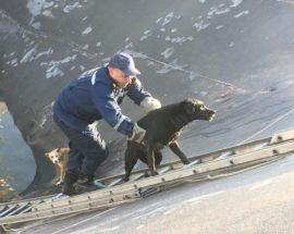 Фастівські рятувальники врятували собак з глибокої ями