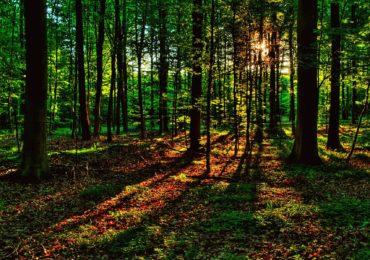 Прокуратура хоче повернути відчужені землі лісового фонду на Фастівщині у власність держави