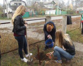 Дерева в пам'ять про роки навчання: у ворзельській школі випускники висадили саджанці червоного канадського дуба