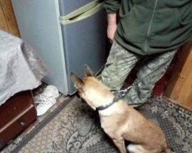 На Васильківщині допоміг знайти наркотики чотирилапий «коп»