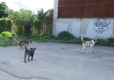 Безпритульні собаки... кидаються на білоцерківців
