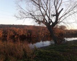 Річка Ірпінь 2018