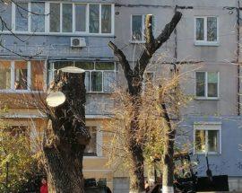 Топінг чи знищення дерев у Василькові?