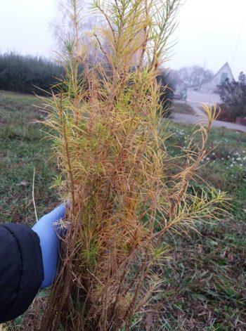 На Васильківщині громадські активісти висадили 30 дерев?