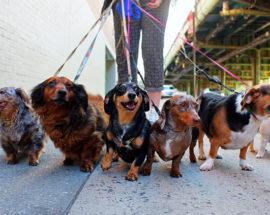 Фастів остаточно визначився з місцями для вигулу собак