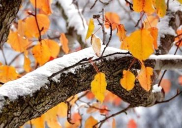 Погода на Київщині у неділю вночі – мороз, вдень – переважно плюсова температура