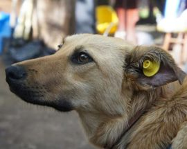 Собаки на вулицях Білої Церкви: захищати чи захищатися?