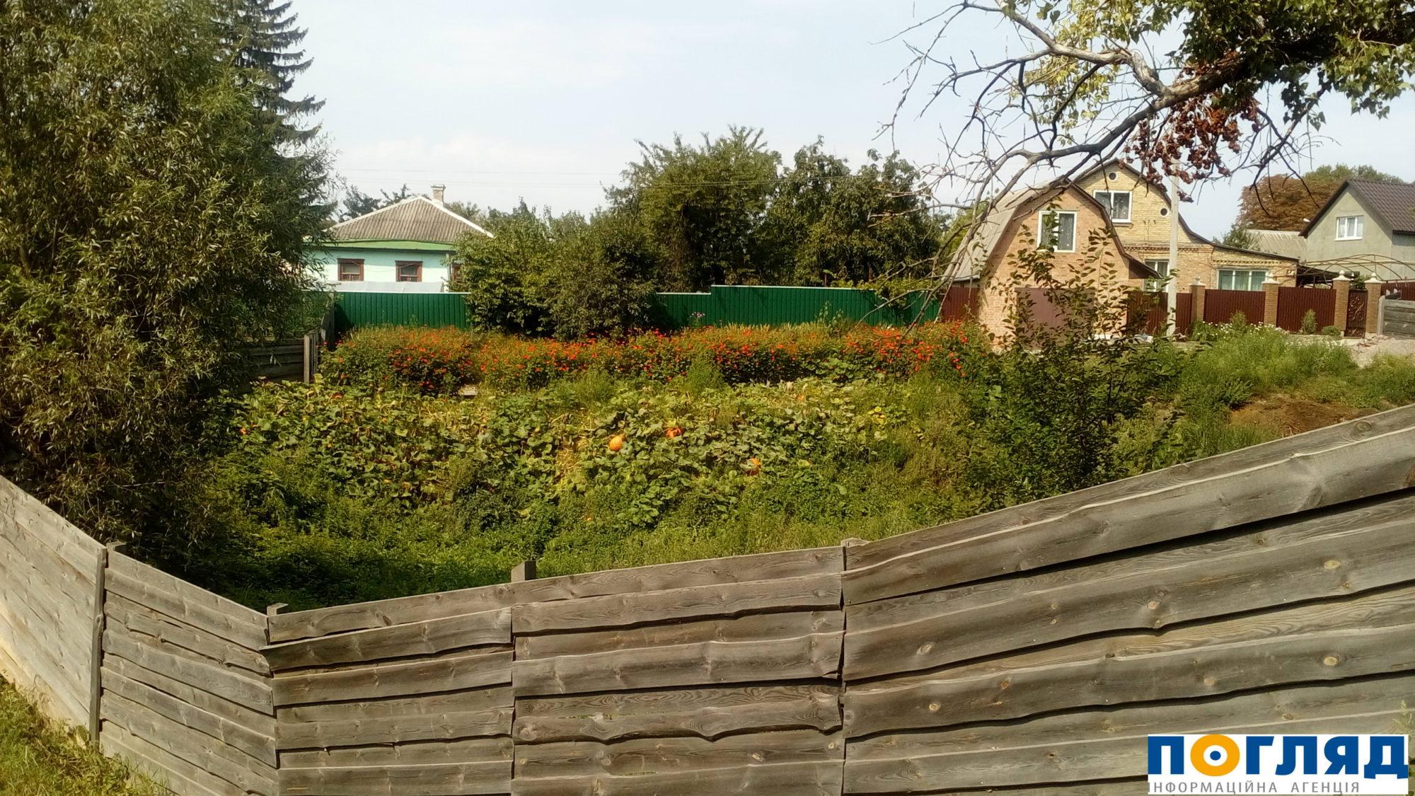 У Ковалівському яру на околиці Василькова, де в 1941-1942 роках розстрілювали євреїв, влітку у наш час ростуть гарбузи