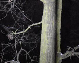 """Ірпінська """"котовасія"""": мунварта зняла з дуба кота, який просидів на дереві більше 10 годин"""