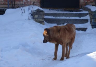 Проблема безпритульних тварин: в Ірпені проведуть круглий стіл щодо регулювання їх кількості та ветеринарного контролю