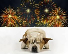 Горе-салюти і допомога соцмереж: собака так злякався феєрверка в Ірпені, що ледь знайшовся аж у Бучі