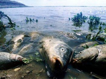 Асоціація рибалок України б'є на сполох: обсяг вилову риби за 30 років скоротився у 18 разів - риба, водні біоресурси - gr 26.08.16 katastrofa 350x263