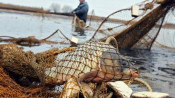 Асоціація рибалок України б'є на сполох: обсяг вилову риби за 30 років скоротився у 18 разів - риба, водні біоресурси - ryba 1143964368 350x196