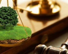 Броварська прокуратура вимагає повернення земель на Київщині вартістю понад 1,2 млн гривень