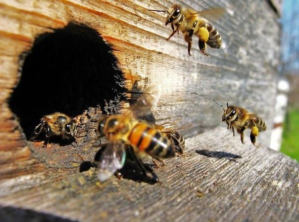 4b575dc24b6b26a1c2aecf845f9e3170 В'язниця через смерть бджіл від пестицидів