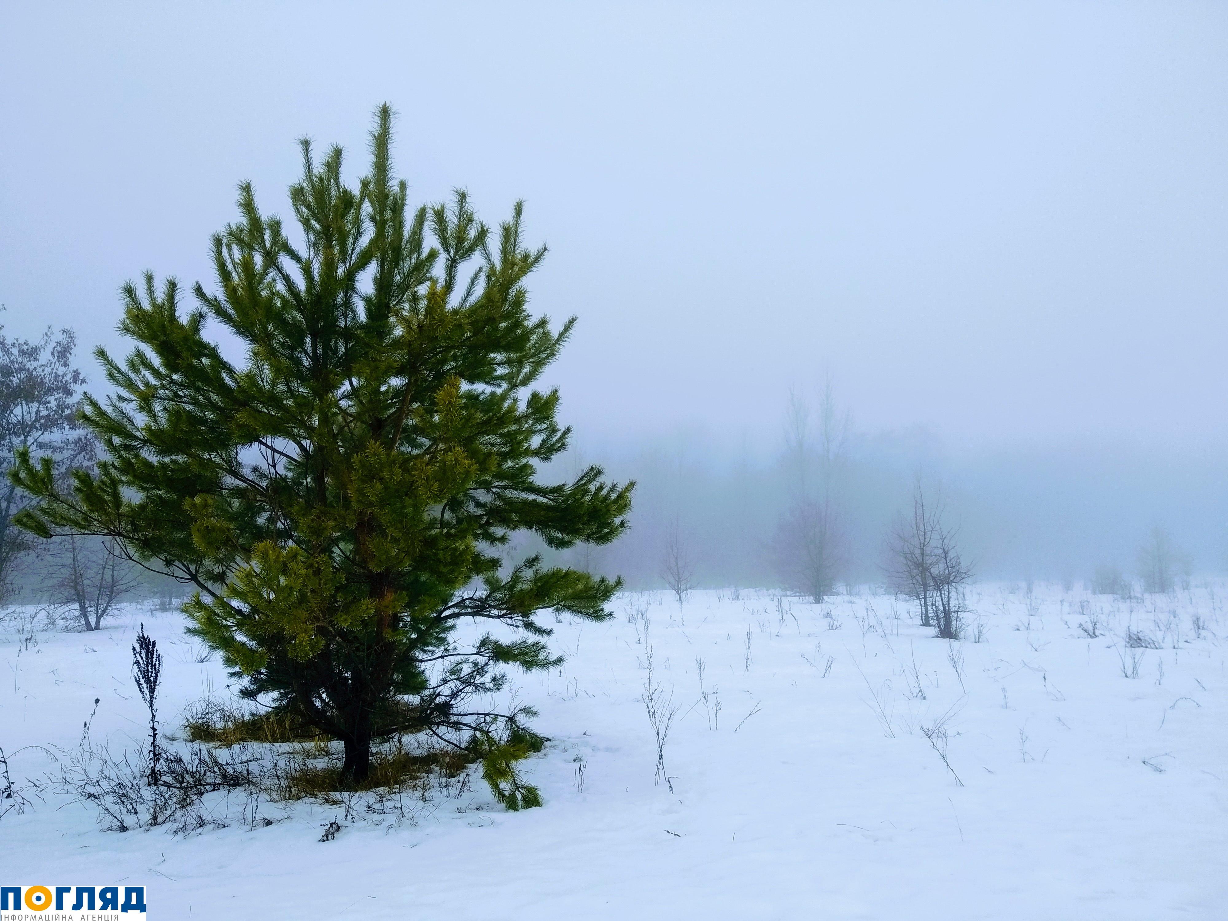 508 Туман – потенційна небезпека: рекомендації водіям