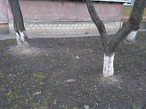 Бички – підсніжники обурили обухівчан - цигарки, сміття, курці - 52556889 385193092307438 2490133175347445760 n