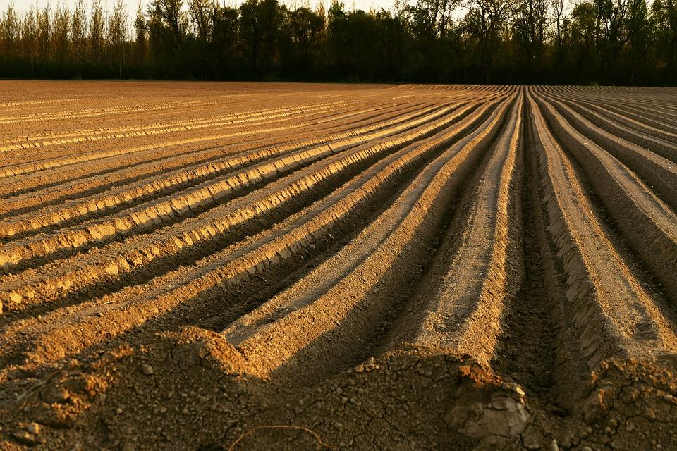 5_74 Мораторій на продаж сільгоспземель продовжується, Порошенко підписав закон