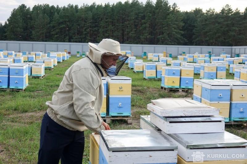Медові непорозуміння: бджоляри Київщини вийшли зі Спілки пасічників України