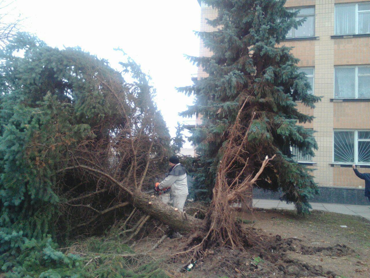 0-02-08-729dbd8e6be5437f88c6cf7b46a7e7300cdca72b7af0f949b9f02d48d8b30bf6_159c8e9d-1 Падіння дерев від поривів вітру не оминуло й Таращу