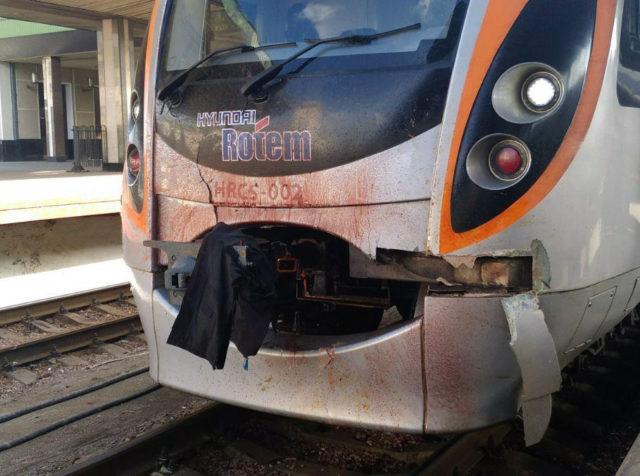 На Київщині потяг збив лося