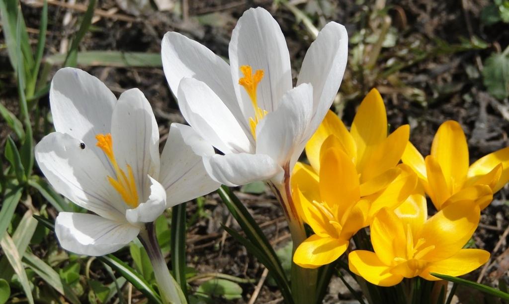 29 березня в Україні почнеться потепління - весна - 2803 prognoz pogody2
