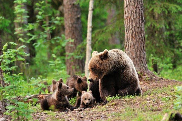 2903_tysha З 1 квітня в українських лісах настане «Сезон тиші»