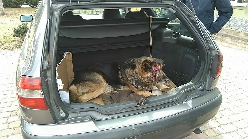 У Борисполі садисти познущалися над псом - Поліція, пес, Бориспіль - 55845461 2371789889709466 6847515872395788288 n