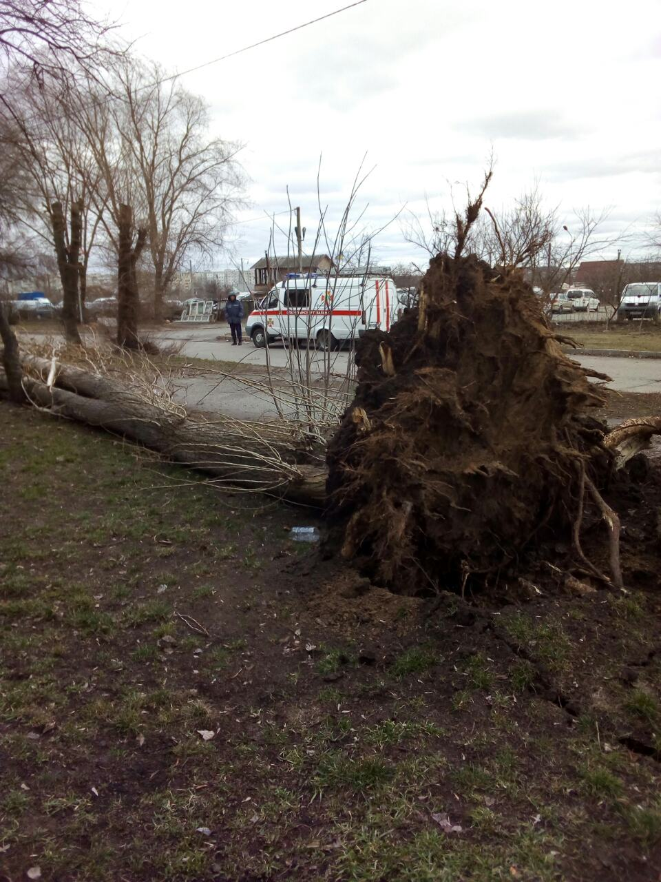 У Білій Церкві негода повалила багато дерев