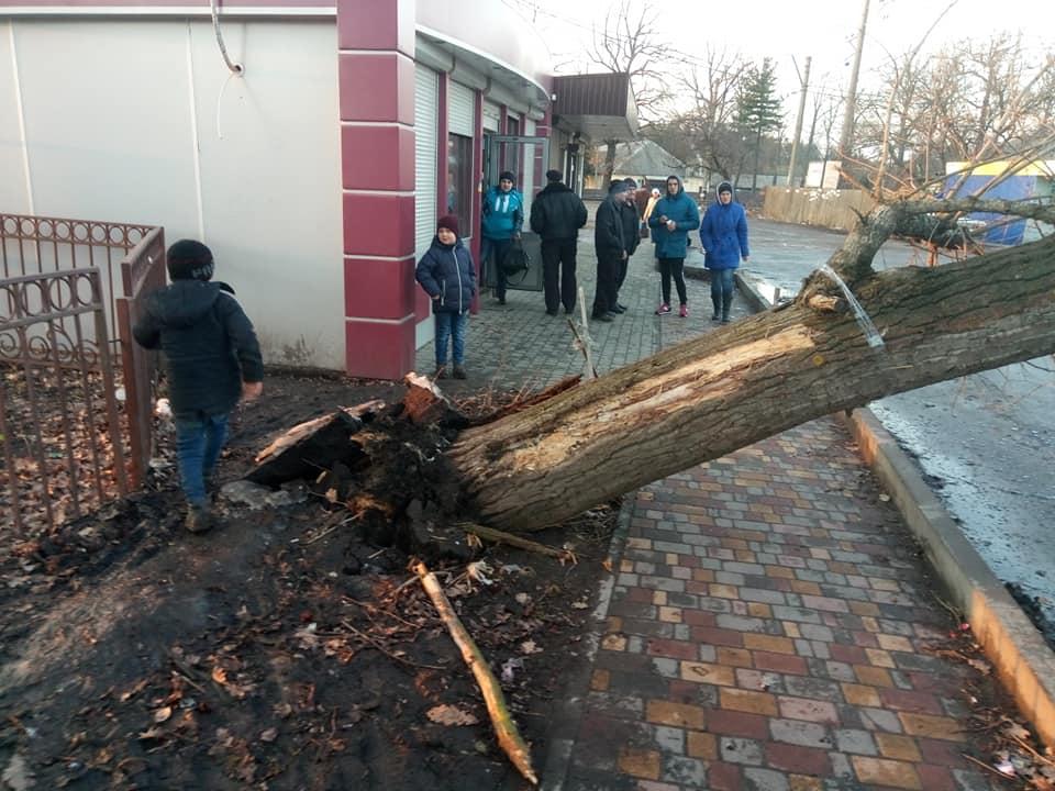 У Боровій на Фастівщині на маршрутку впало дерево
